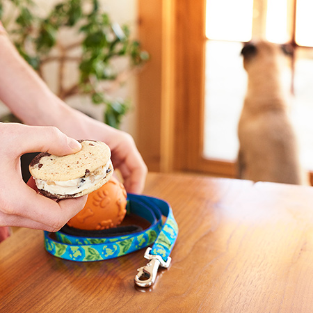 Multitasking with Ben & Jerry's 'Wich - Walk Fido