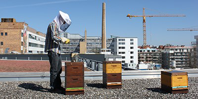 Find nearby bees and buy honey directly from the beekeeper next door